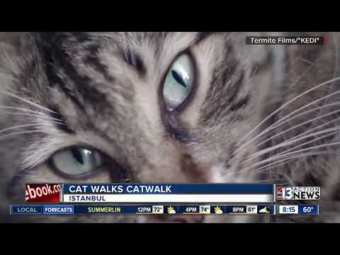 35c0c736b6 Cat walks catwalk in Turkey